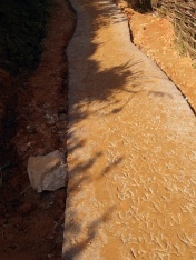 The new concrete path through one village, indelibly marked by chickens.