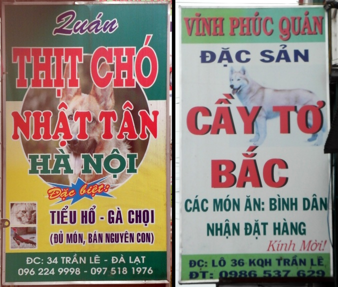 """Did the recommended """"Thịt Cầy Bắc"""" refer to """"Thịt Chó"""", or """"Cầy Tơ Bắc""""?"""