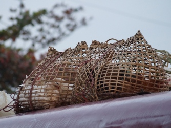 Ducks atop out neighbouring bus.